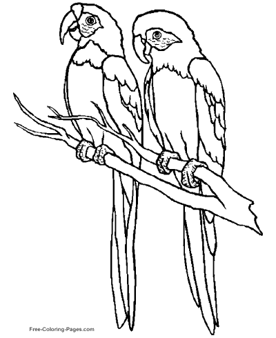 Coloring pages of birds for Coloring page of a bird