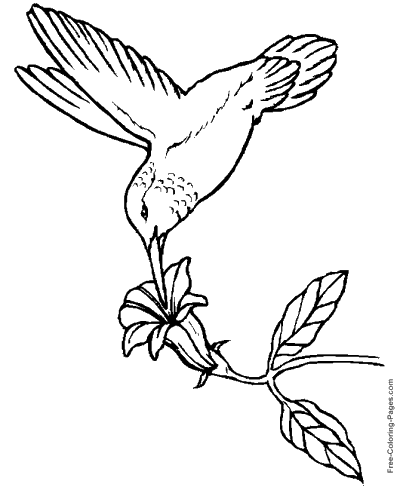 12 Best Free Printable Bird Coloring Pages For Kids | 490x400
